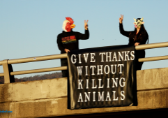 Give Thanks Without Killing Animals